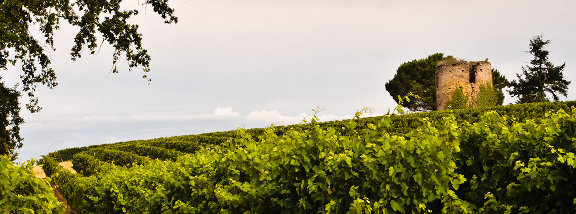 Image of the Vineyards of Hauts De Montrouge, Gers - South West France