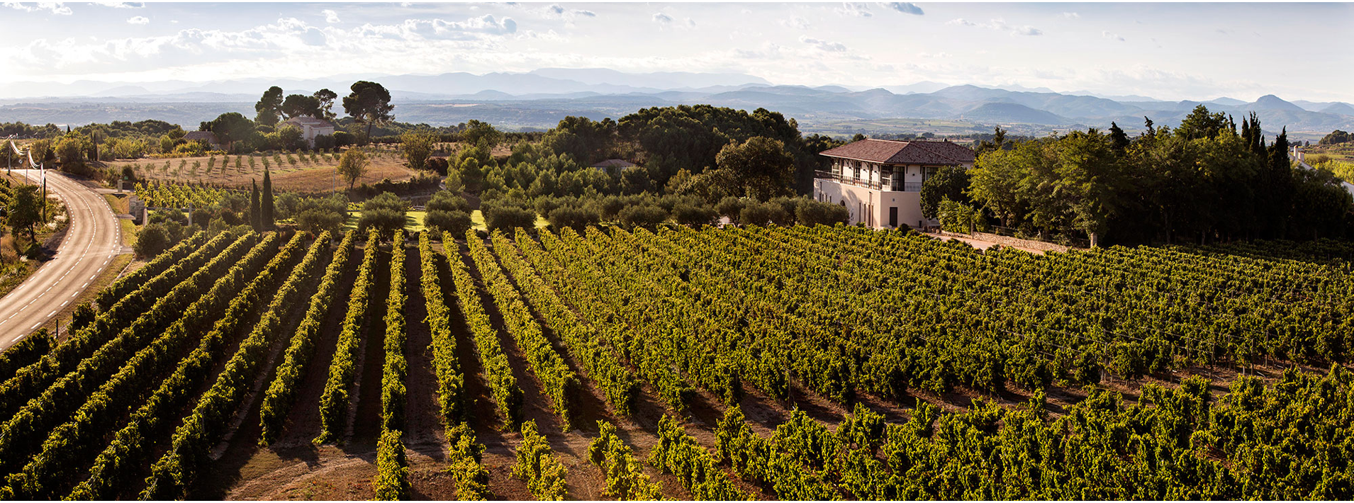Stunning image of 'Domaine Paul Mas' and surrounding vineyards