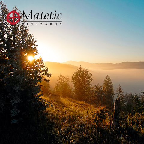 Image of landscape near the Matetic Vineyards