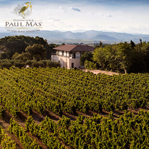 Image of Paul Mas Vineyard